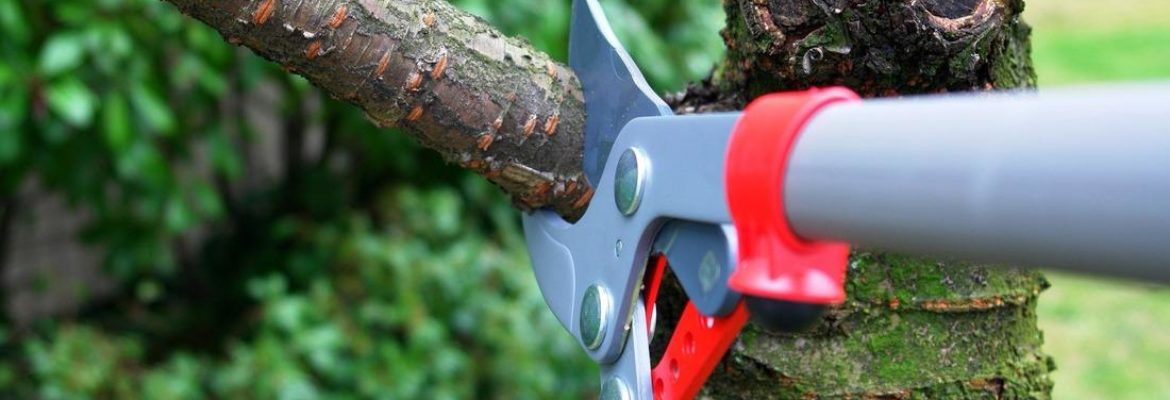 Reliable Landscaping & Maintenance
